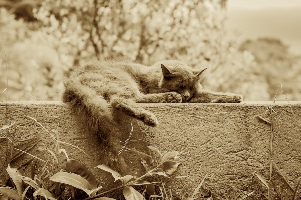 Gato dormindo em cima de muro