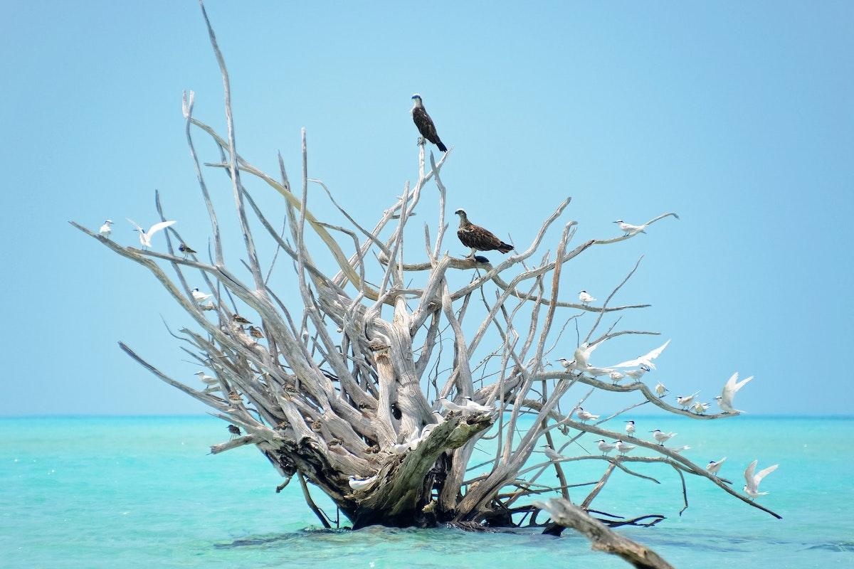 Aves em mangal seco